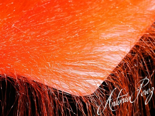 Fine  Hair Orange Foncé